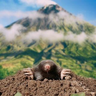 a-mountain-or-a-mole-hill